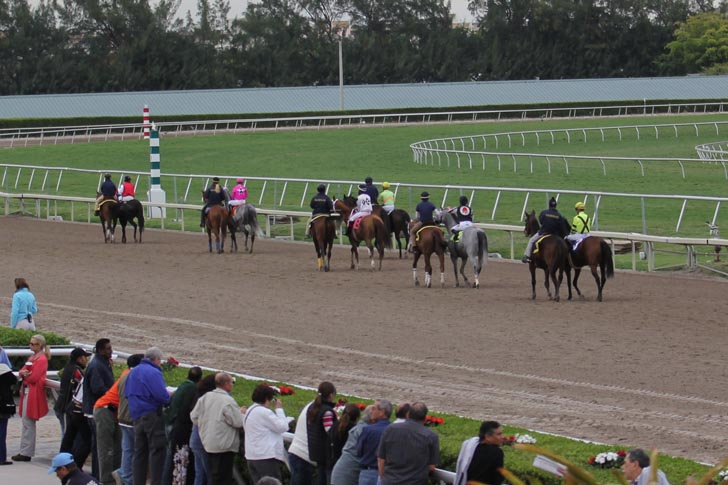 Musings from my Grade One Couch: Analysis of Gulfstream Park for April 17th, 2020