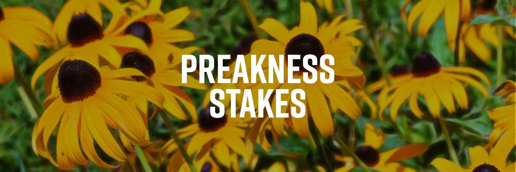 It's Post Time by Jon White: Preakness Stakes Selections