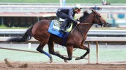 It's Post Time by Jon White: My 2018 Eclipse Award Choices