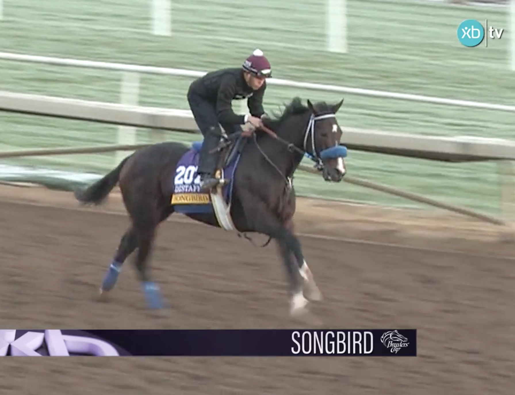 Leverage Plays: Betting the Breeders' Cup Distaff